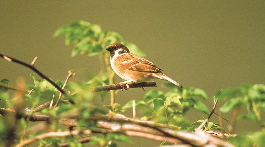 sparrow-8