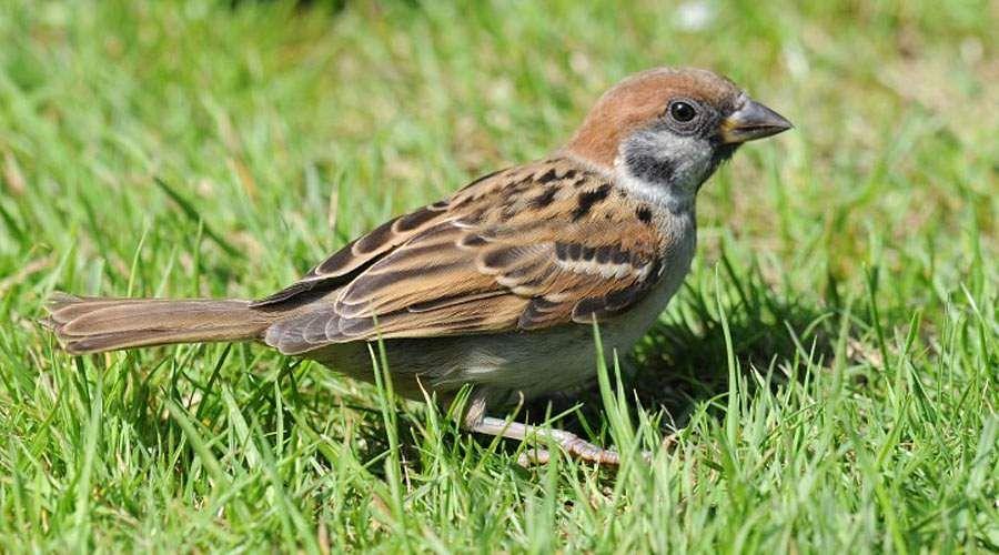 sparrow-9