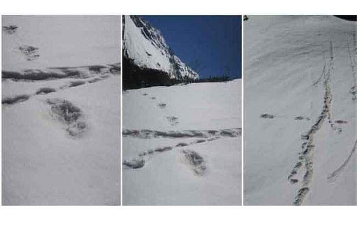 yetti--footprints