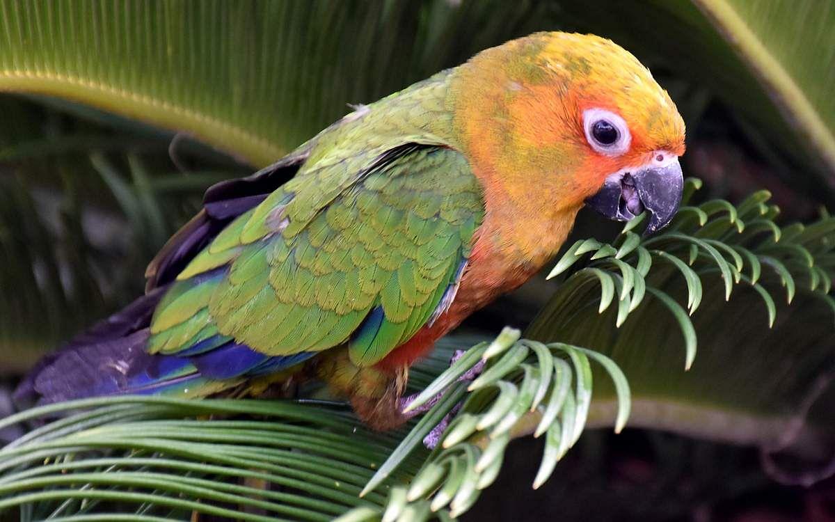 BIRD18