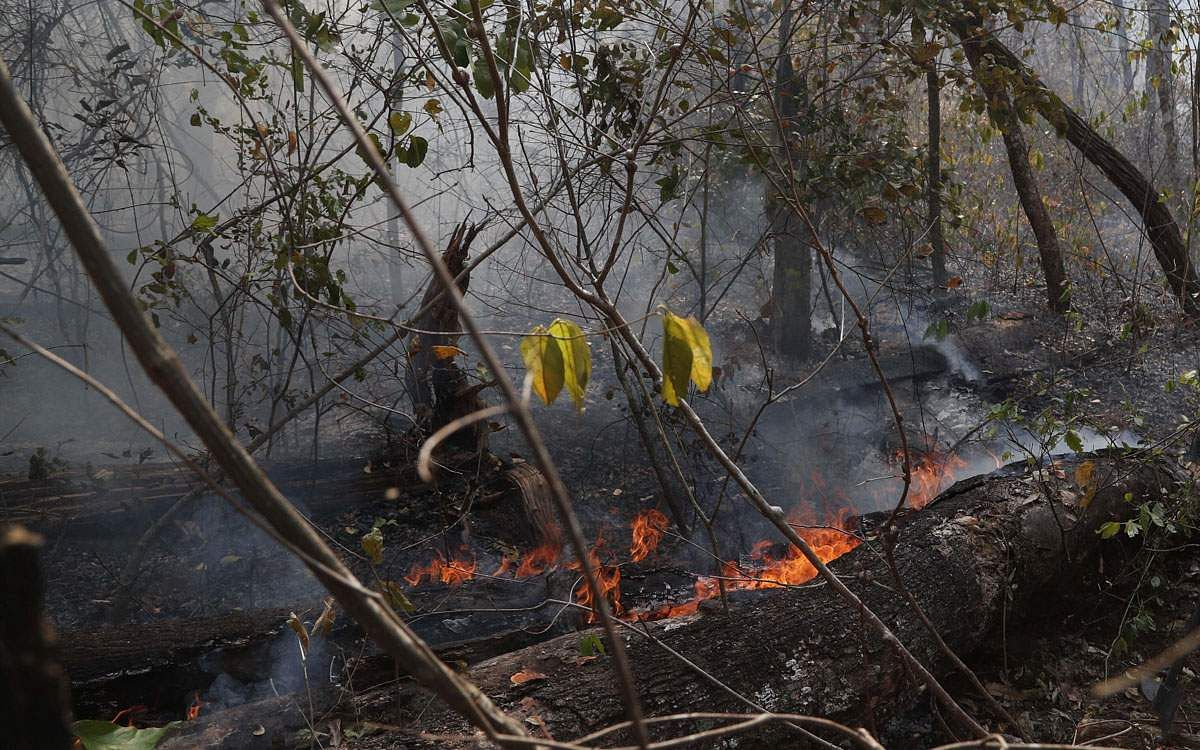 amazon-forest-fire-5