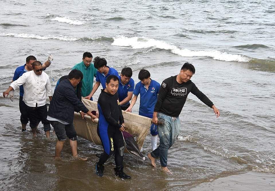 China Dolphin