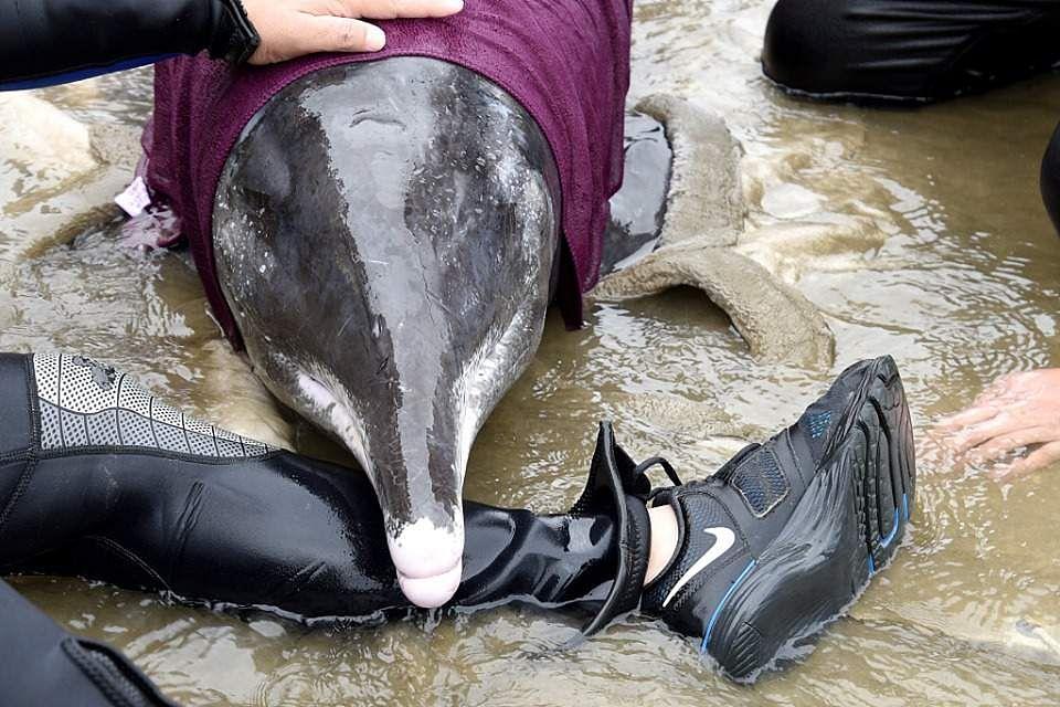 China Dolphin 2