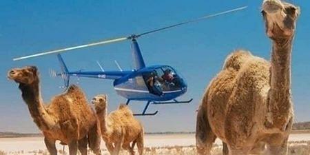 camel071024