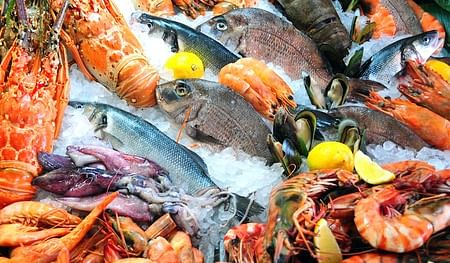 seafood090225