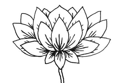lotus052424