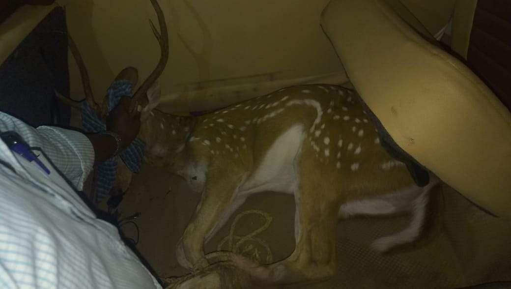 stranded deer rescued