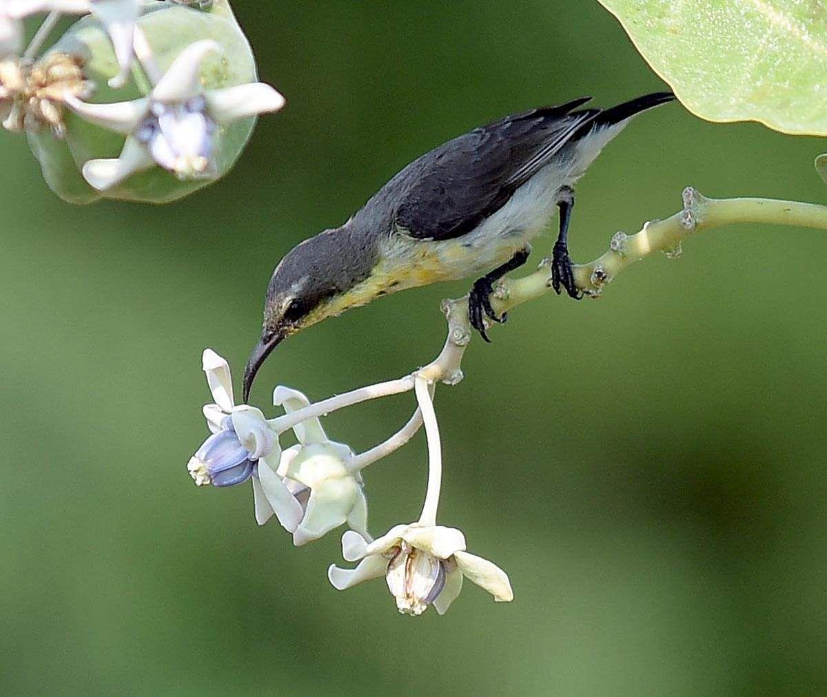 honeybird-2