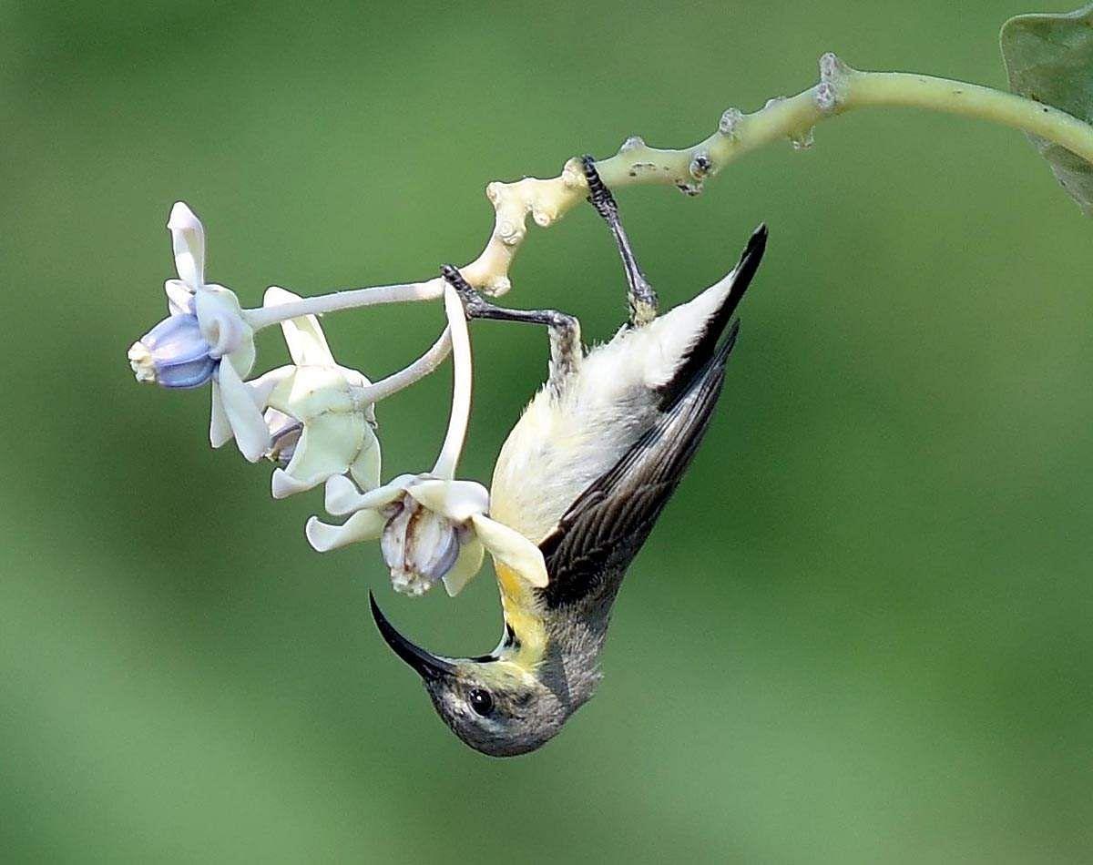 honeybird-5