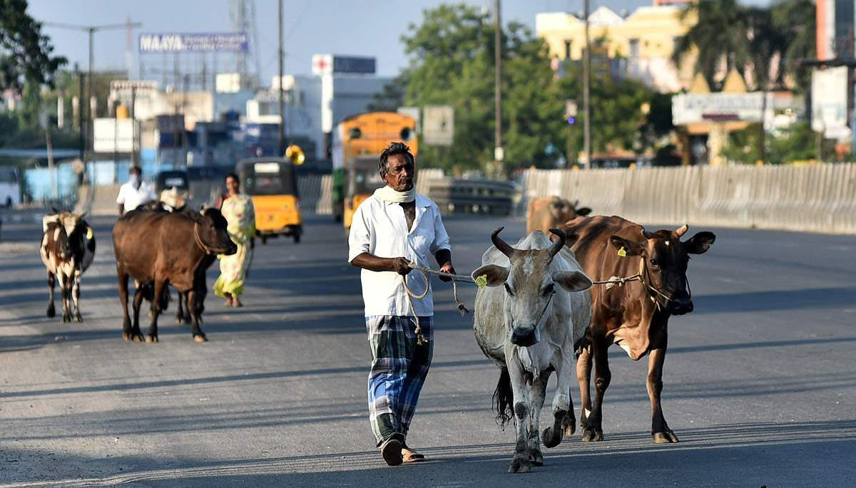 Chennai_Bandh_-_Day_9_-7