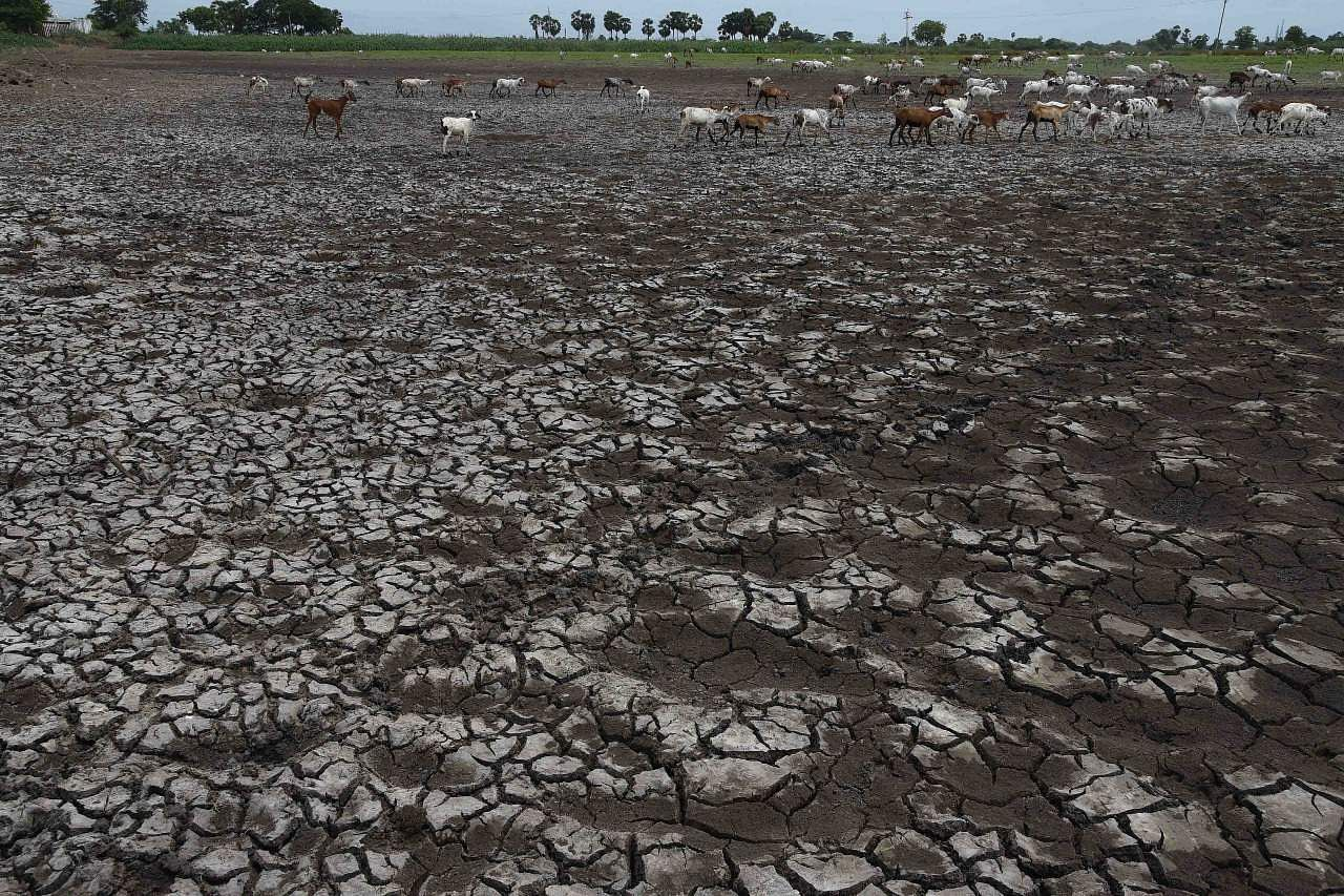 Southwest Monsoon Delay: Livestock in trouble