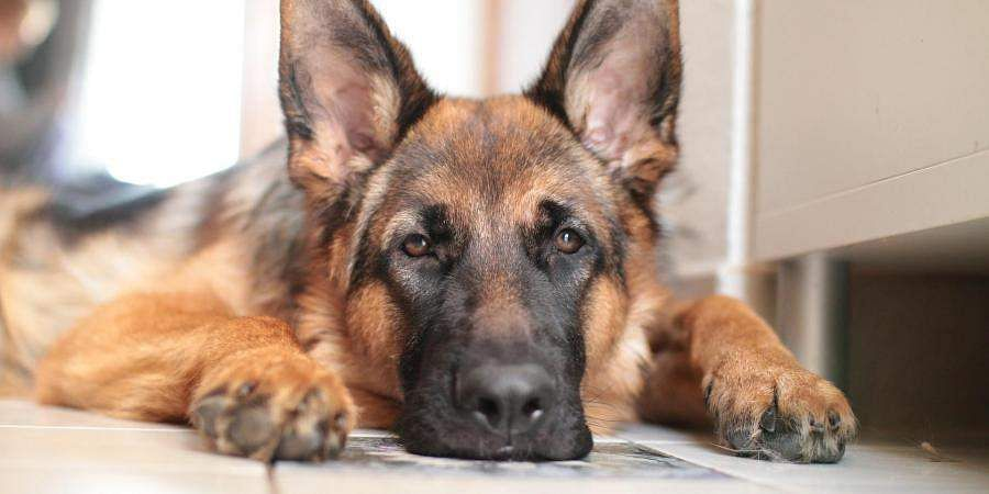 First dog that tested positive for COVID-19 dies in New York