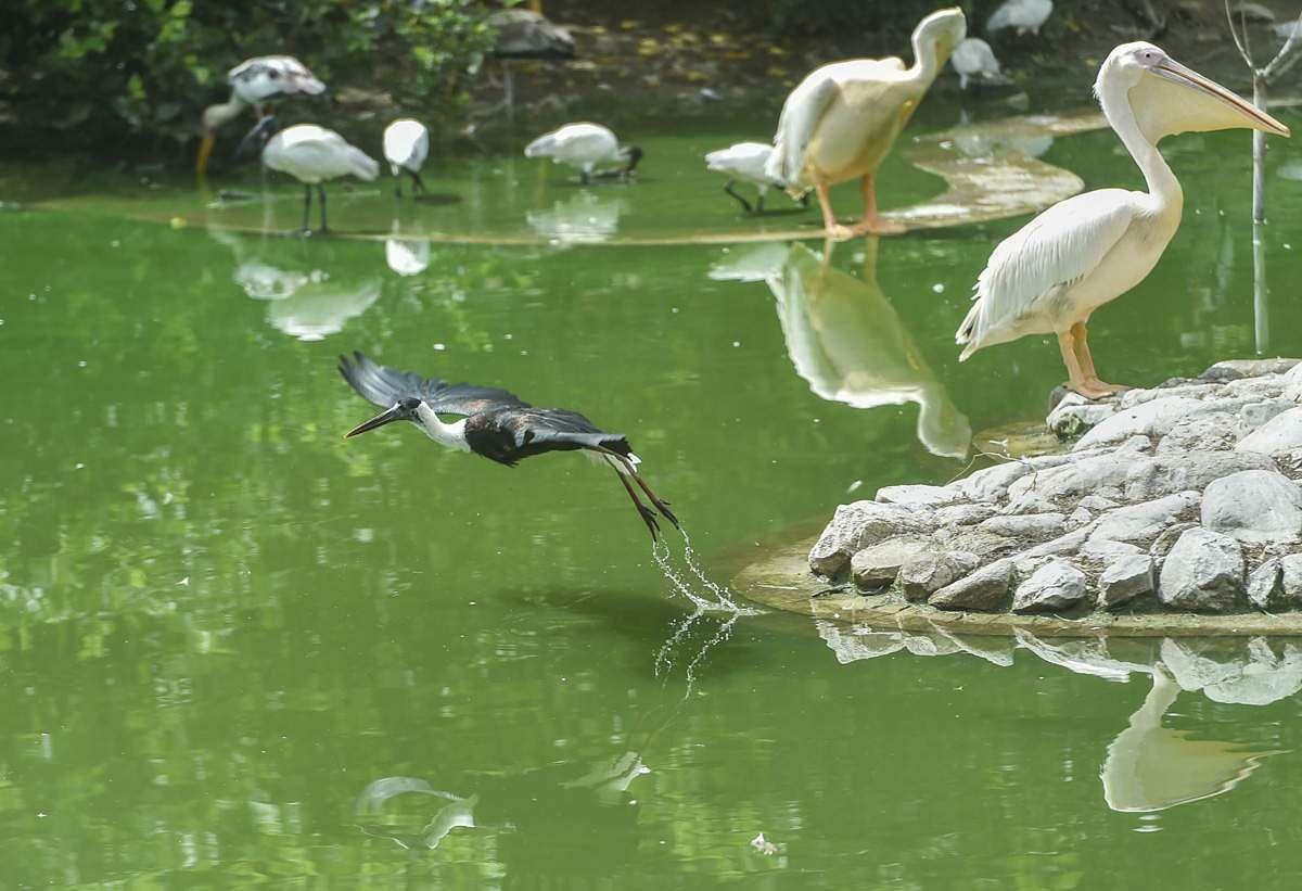 உலக புகைப்பட திடம் - புகைப்படங்கள் Birds-1