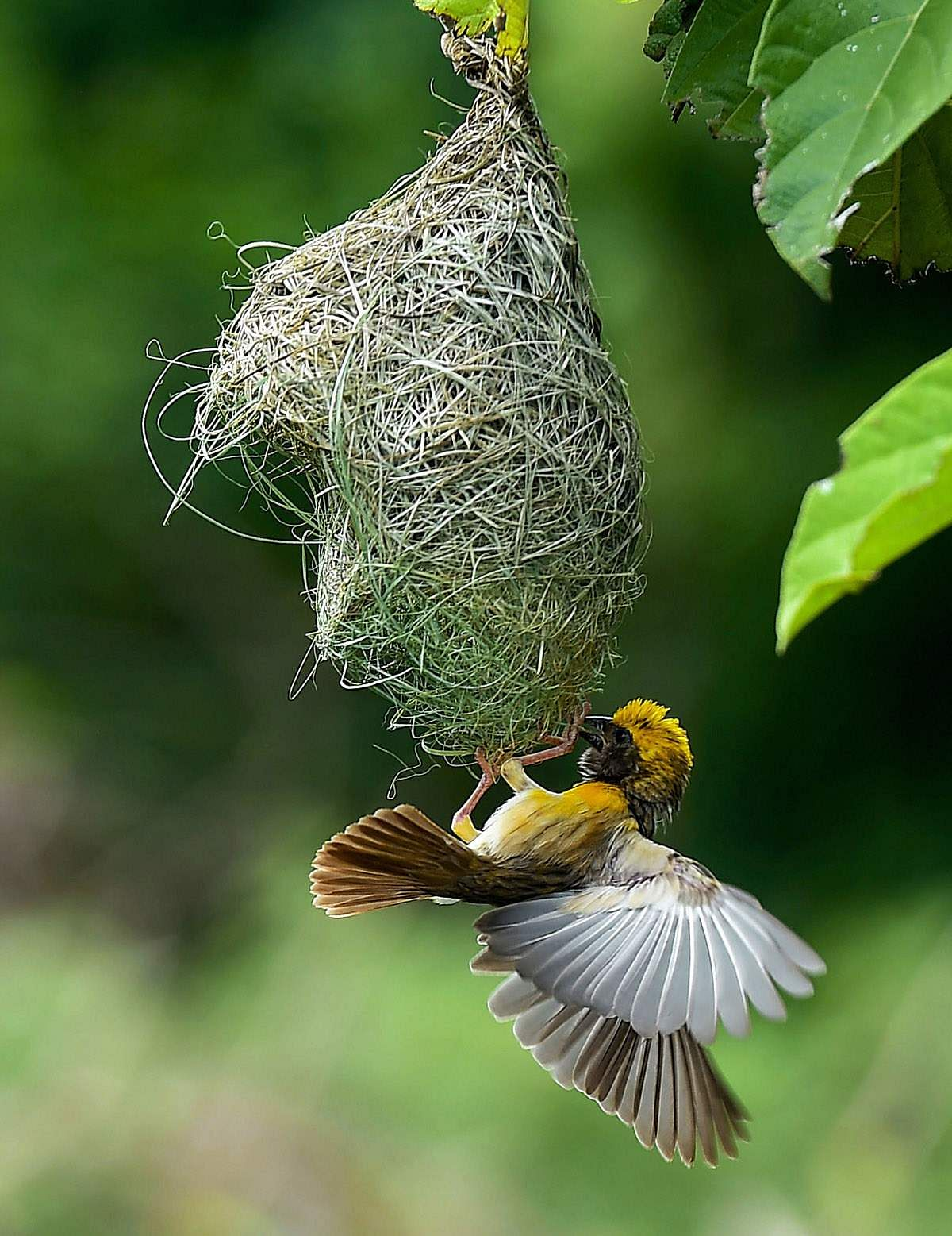உலக புகைப்பட திடம் - புகைப்படங்கள் Birds-3