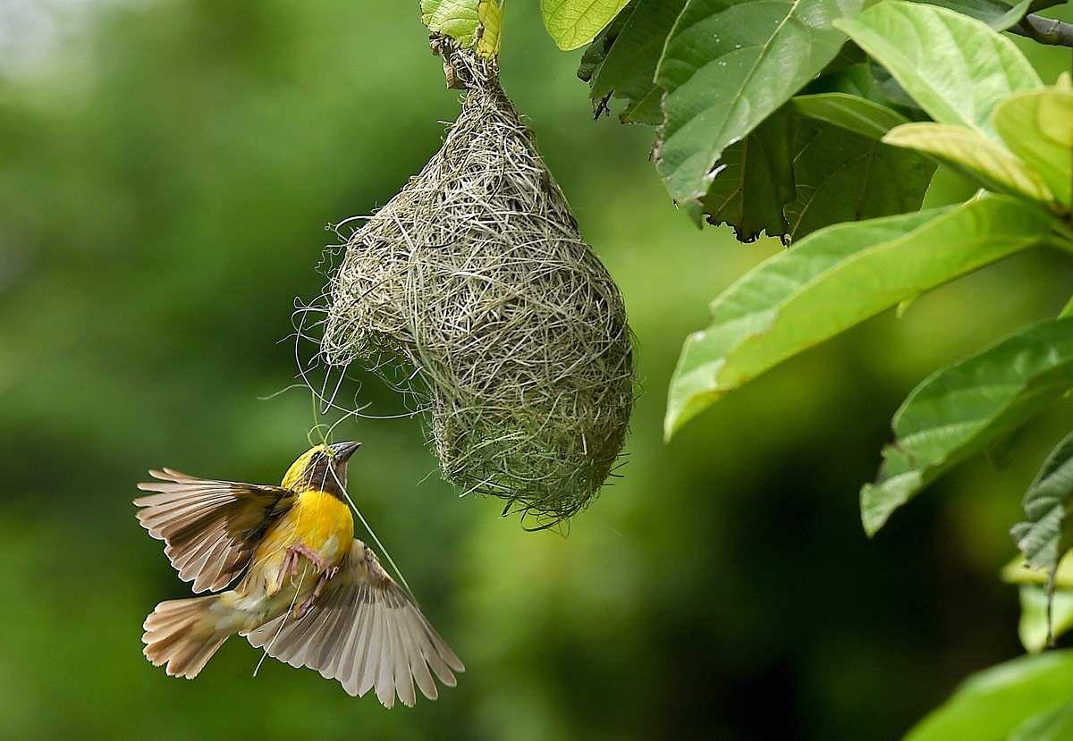 உலக புகைப்பட தினம் - புகைப்படங்கள் Birds-4