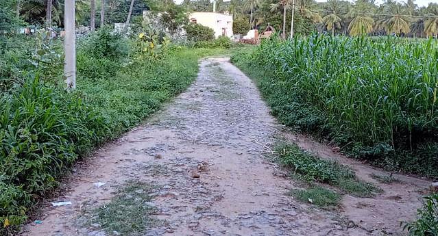 வெங்கடசமுத்திரம் ஊராட்சியில் இந்திரா நகா் பகுதிக்குச் செல்லும் கரடுமுரடான சாலை.