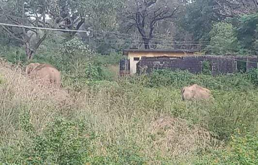 Elephant camp near Manjolai Government School: Students unable to go to school