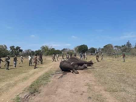Death of a male elephant with an ear injury near Cuddalore; 3 elephants killed in a row