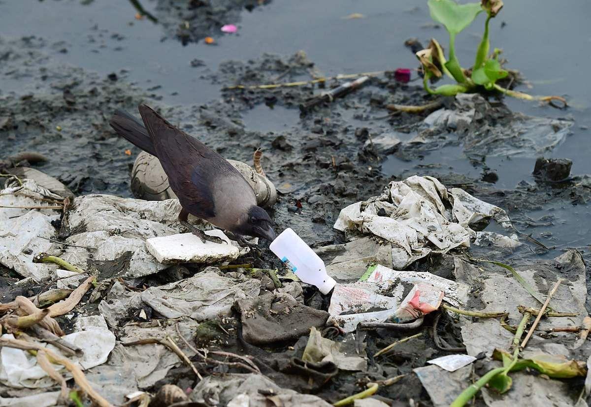 World-pollution-day-11