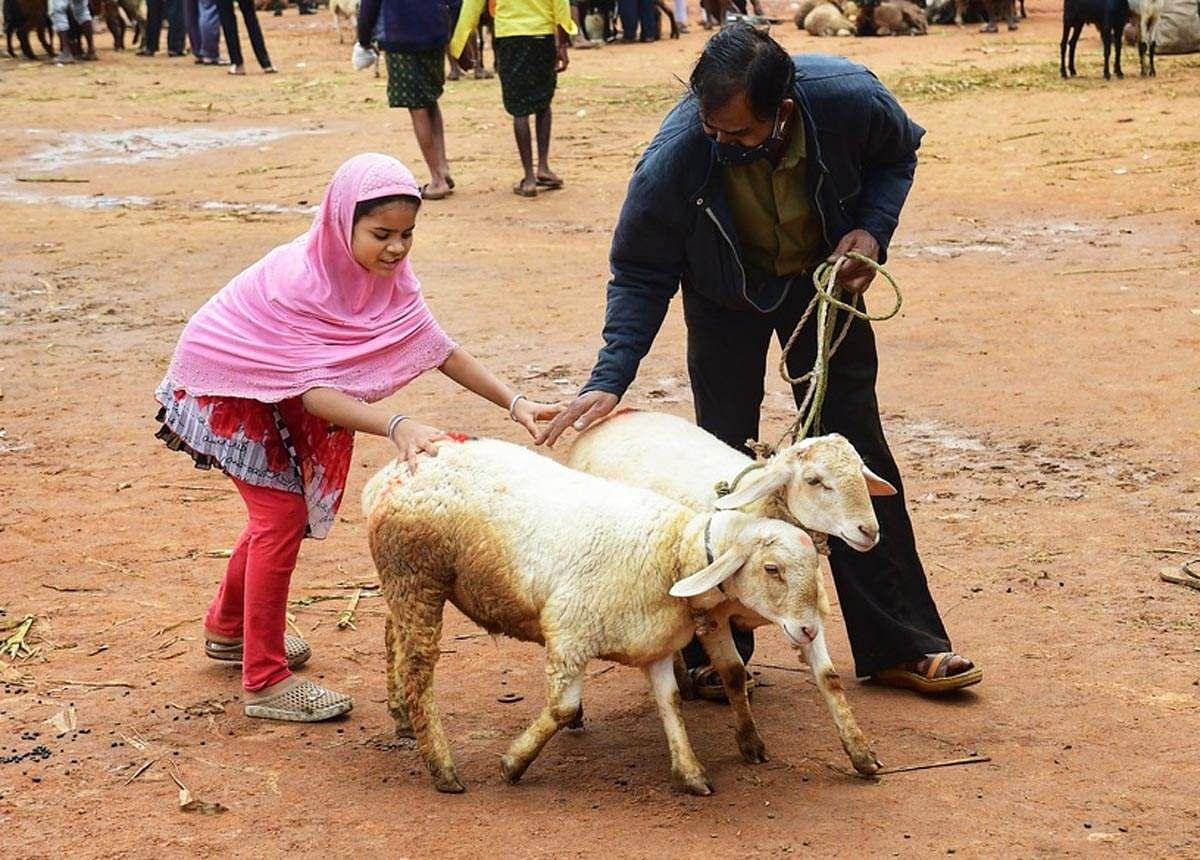 Goat-7